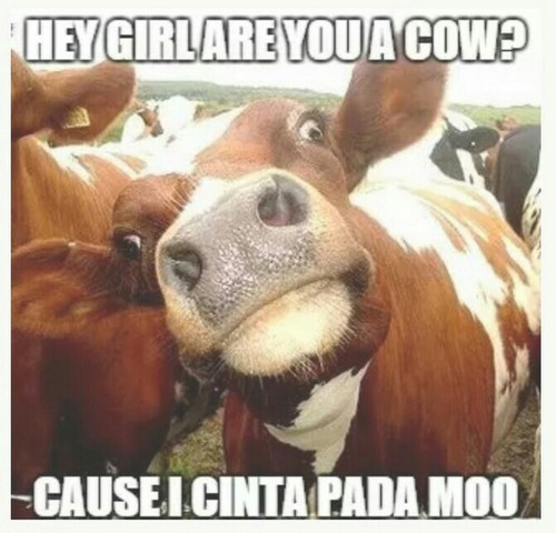 cow_pick_up_lines5